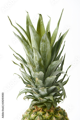 close up of fresh pineapple leaves isolated on white