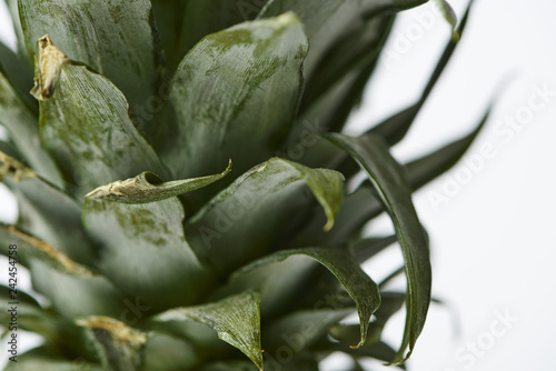 close up of green leaves of sweet pineapple isolated on white