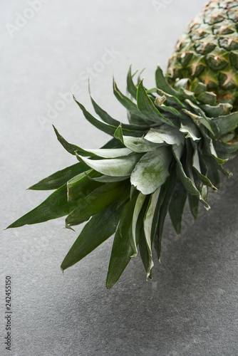 close up of green pineapple leaves on grey background