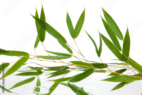 branches and green and fresh leaves of bamboo reflected on mirror and water with white background