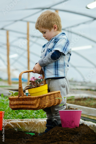 green plant. small gardener grow green plant. happy kid grow plant in greenhouse. grow plant in modern oragery. paying attention to every detail