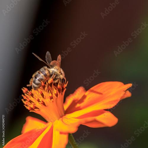 Leinwanddruck Bild Bee on the flower