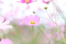 """Постер, картина, фотообои """"flower"""""""