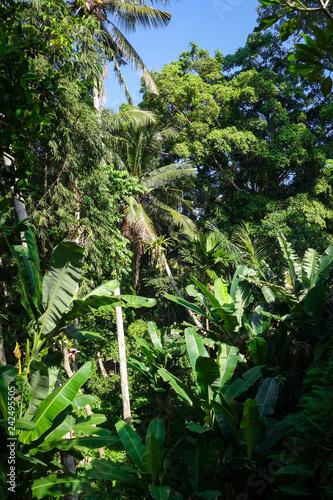 Jungle landscape in Goa Gajah elephant cave, Ubud, Bali, Indonesia