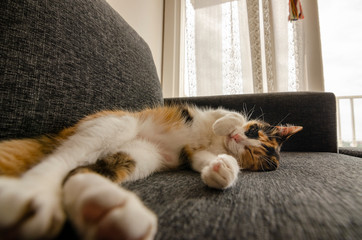three-colored cat resting on the sofa