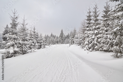 Winter landscape with cross-country ski trail.