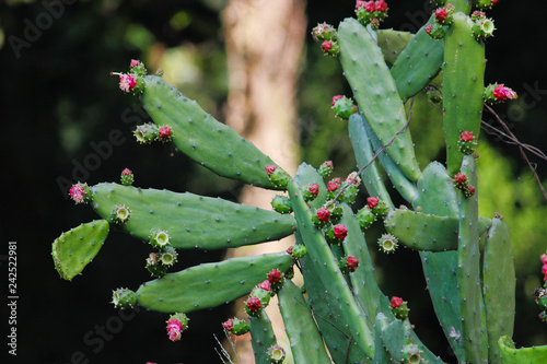 cactus with flowers