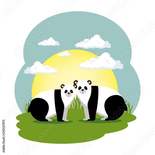 cute panda bears couple in the field scene