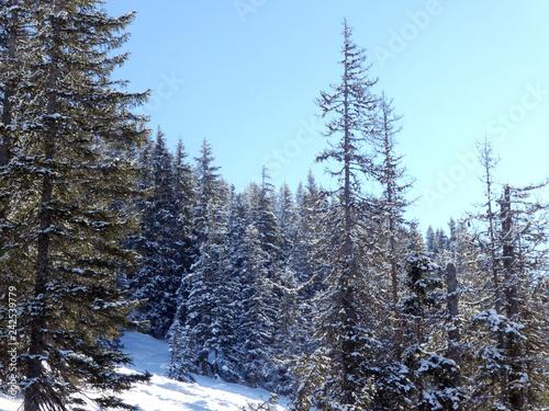 Skifahren in Saalbach Hinterglemm Leogang - 242539779