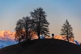 Baumgruppe im Abendrot - 242555791