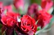 Leinwandbild Motiv rote Rosen