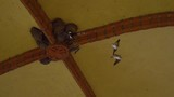 Birds fly to and from nests in the crook of a yellow archway - 242560355