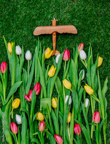 Beautiful white, yellow and green fresh tulips and wooden airplane lying down on green grass - 242561345