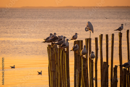 Foto Murales Twilight sunset with sea and seagulls at Bang Pu, Thailand