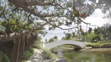 Shot of canals and tree with decorative lanterns hanging in it. - 242579920