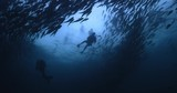 Underwater photographer in the middle of jack fish storm, spins and gets his shot - 242598902