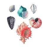 Watercolor shells set - 242603513