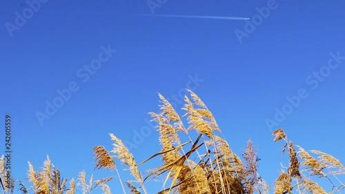 A plane flying over a farmland.
