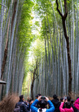 Fototapeta Bambus - Bamboo Forest, Arashiyama, Kyoto, Japan November 16, 2017; a popular ecological destination where unidentified tourists taking photos in this famous and spectacular spot. © Wiyada