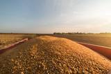 Corn grains in tractor trailer - 242635991