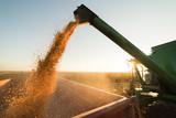 Pouring corn grain into tractor trailer - 242638130