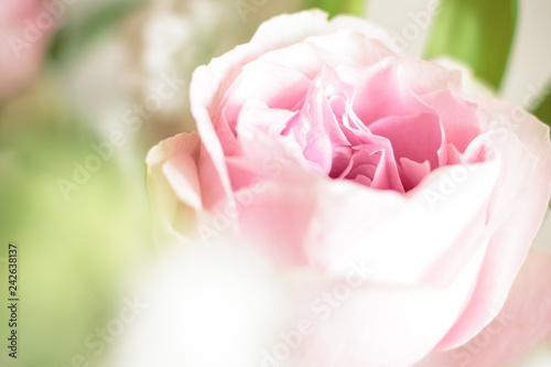 Leinwanddruck Bild sweet pink rose flower with bokeh, shallow depth of field