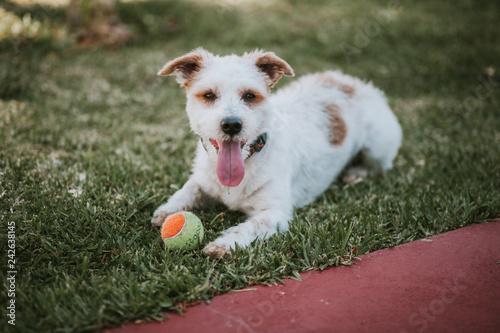 obraz PCV Pet Dog