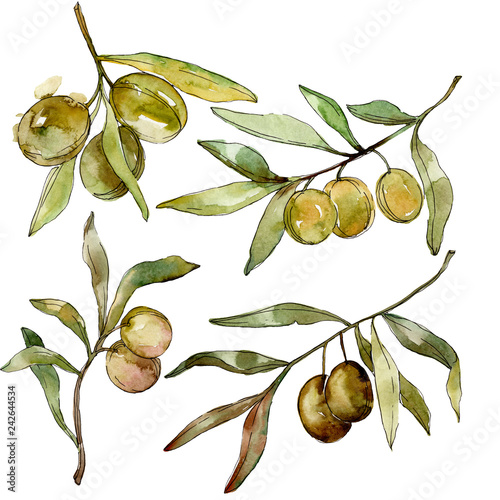 Green olives watercolor background. Watercolour drawing aquarelle. Green leaf isolated olives illustration element.