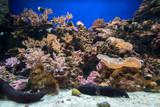 coral in aquarium,Osaka japan