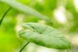 Leinwandbild Motiv Green fresh plants grass closeup for background