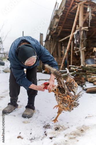 Foto Murales Old peasant woman feeding chicken