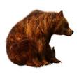 3D Rendering Brown Bear on White.