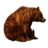 3D Rendering Brown Bear on White. - 242667725