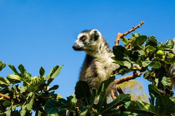 Lemuri © DPI studio