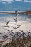 Vogelessen - 242672349