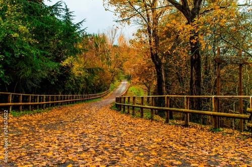 mata magnetyczna autumn scene