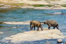 """Постер, картина, фотообои """"young elephants crossing the river"""""""