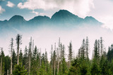 Tatra National Park, Poland. Summer Mountains And Forest Landsca - 242707932