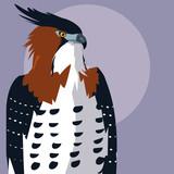 imposing hawk bird icon - 242714774