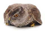 One brown falcon.