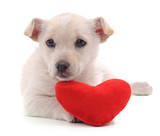 Puppy and heart. - 242741397