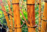 Bamboo trunk in the garden.