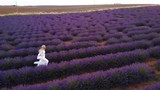 Aerial Slow motion footage of a young woman dressed in white running through lavender fields in Valensole summer sunset in France provence - 242778597
