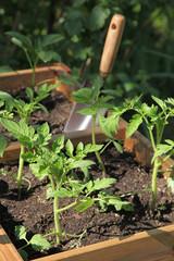 Plantation dans un carré potager © hcast