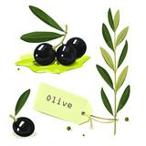 Olive branch. Vector illustration.
