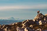 Fototapeta Fototapety na sufit - Corsa al tramonto in montagna in inverno © Giorgio Pulcini