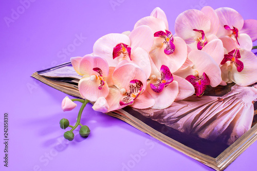 artificial orchid on a magazine, lilac background