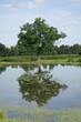 large tree with reflection in water