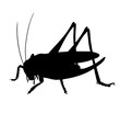 Silhouette of grasshopper. Hand drawn style design illustrations