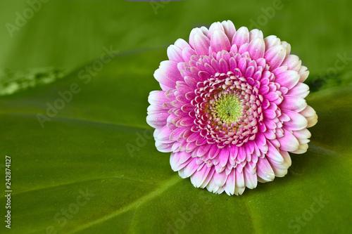 Zen Still Life With Flower